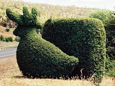 Topiary Trail